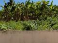 garden view.jpg